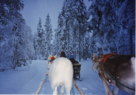 Levi_reindeer_sleigh