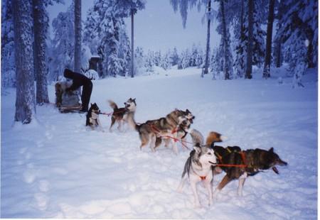 Levi_dog_sled
