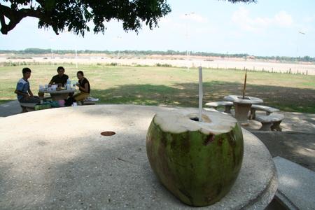 Coconut_in_budha_park