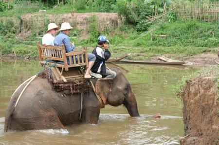 Elephant_riding_at_luang_phabang
