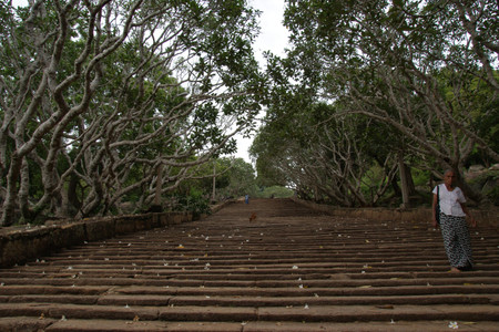 Plumeria_and_stairs_in_mihintale