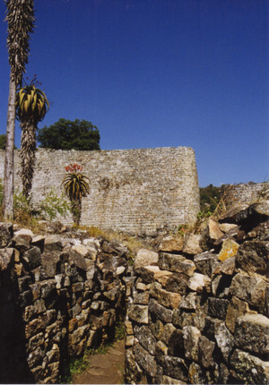 Aloe_in_great_zimbabwe_2