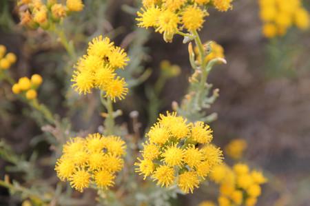 Flower_in_los_glaciares_national__2