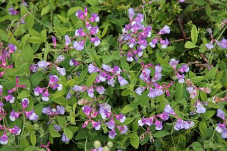 Flower_in_los_glaciares_national__3
