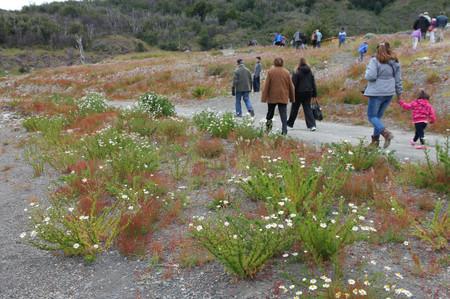 Flower_in_los_glaciares_national__5