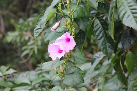 Flower_in_iguazu_1