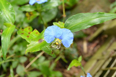 Flower_in_iguazu_3