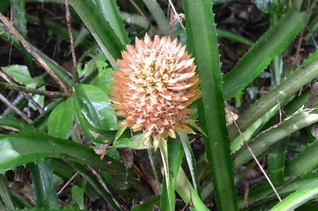 Flower_in_iguazu_4