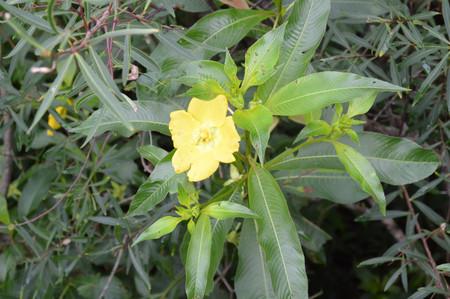 Flower_in_iguazu_5