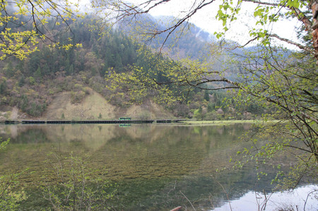 Arrow_bamboo_lake_in_jiuzhaigou