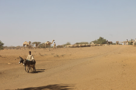 Donkey_camels_and_goats_in_naqa