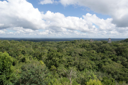 View_from_temple_iv_in_tikal