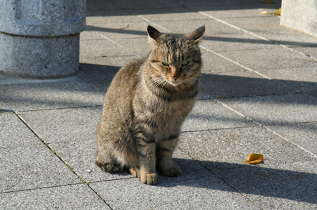 Cat_in_yanagawa