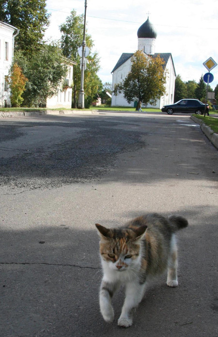 Cat_in_novgorod
