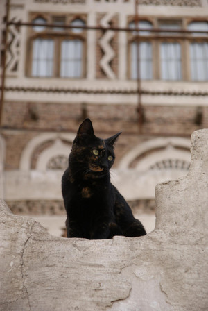 Cat_in_sanaa