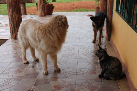 Dogs_and_cat_in_santa_elena_de_uair