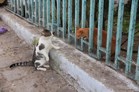 Cats_in_chefchaouen