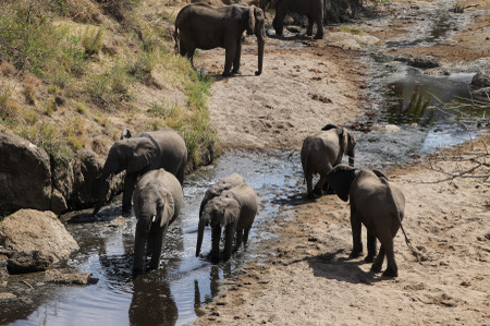 Elephants_in_serengeti