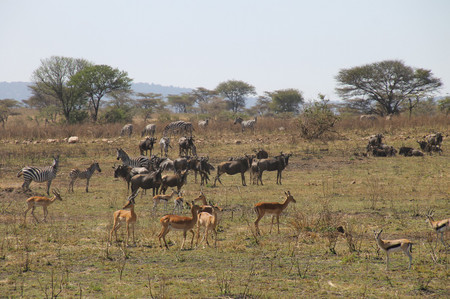 Animals_in_serengeti