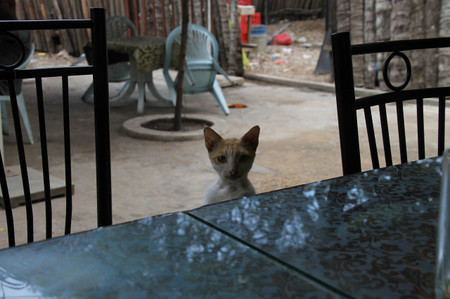 Cat_in_zanzibar
