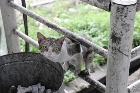 Cat_in_jakarta