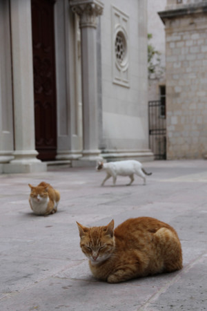 Morning_cat_in_dubrovnik