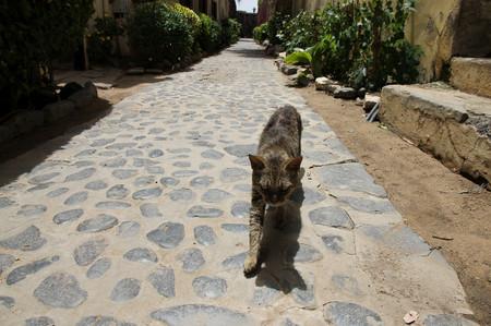Cat_in_gore