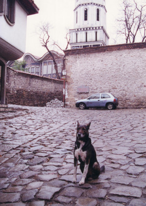 Dog_in_plovdiv