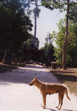 Dog_at_banteay_prei_in_siem_reap