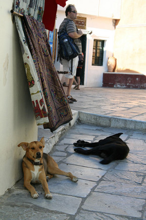 Dogs_in_santolini_island
