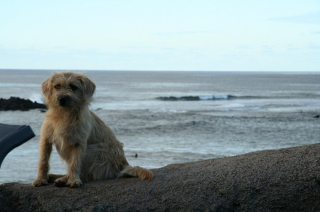 Dog_in_easter_island