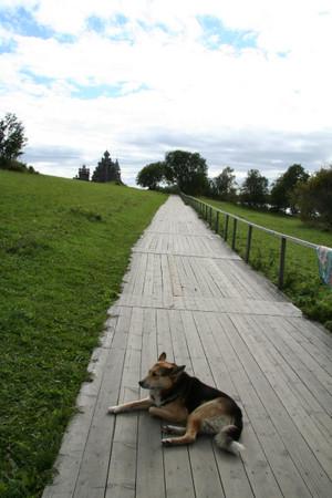 Dog_in_kizhi