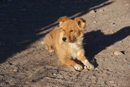 Dog_in_the_village_near_laguna_colo