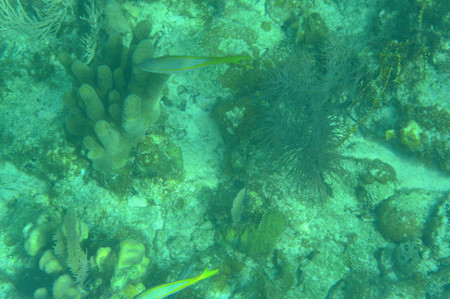Aquarium_at_long_caye_in_belize_bar