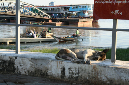 Dog_in_yangon