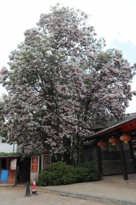 Flower-in-shuhe-1