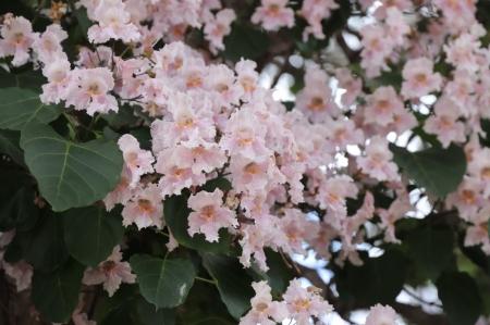 Flower-in-shuhe-2