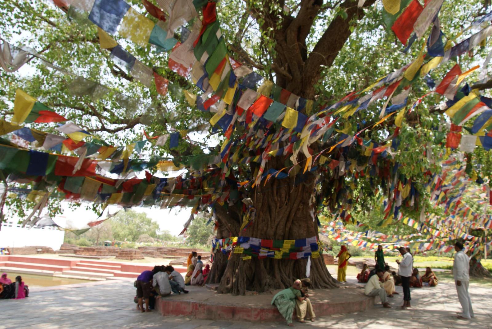 ネパール旅行(4)ルンビニ、バク...