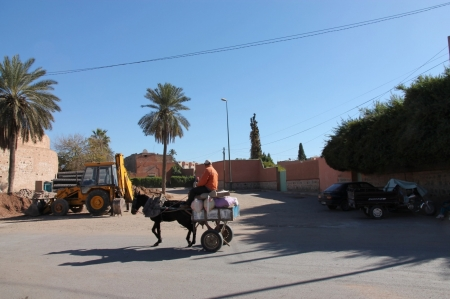 Horse-and-cart-in-marrakech